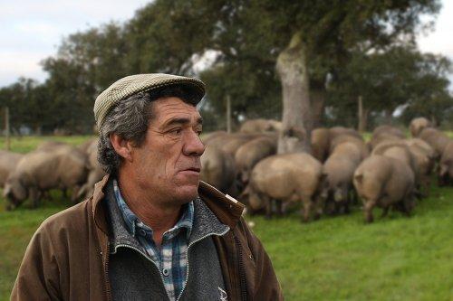 Pastore in un prato, con i maiali che pascolano dietro una quercia